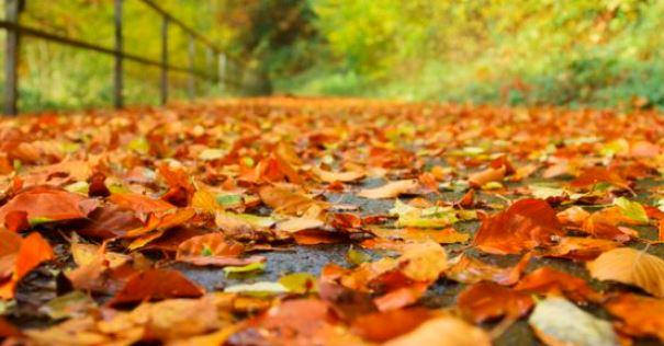 Comment transformer efficacement les feuilles mortes dans la cours ou le jardin ?