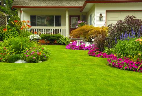 Pourquoi dératiser votre jardin et votre habitation?